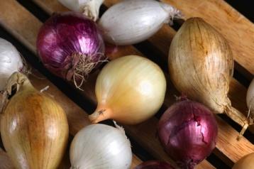 Mixed Onions II © Liz Collet