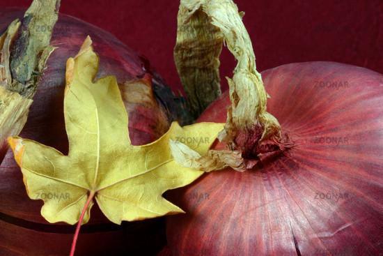 Rote Zwiebel © Liz Collet