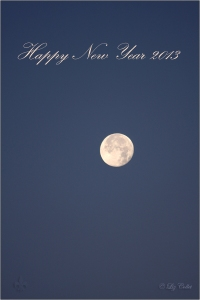 Happy New Year 2013 © Liz Collet