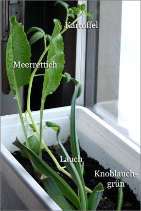 Merrettich, Lauch, Kartoffeln © Liz Collet