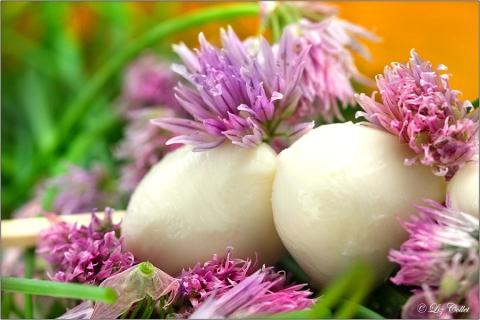 Schnittlauchblüten mit Mozzarella © Liz Collet