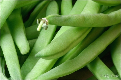 nahrung, lecker, gesund, frisch, gesundheit, vitamine, essen, landwirtschaft, landwirtschaftlich, ernte, markt, genuss, lebensmittel, nahrungsmittel, bio, delikatesse, grün, produkt, ernährung, gemüse, bohnen, biologisch, vegetarisch, leicht, erntefrisch, biogemüse, gartenfrisch, gartenprodukt, bohnengemüse