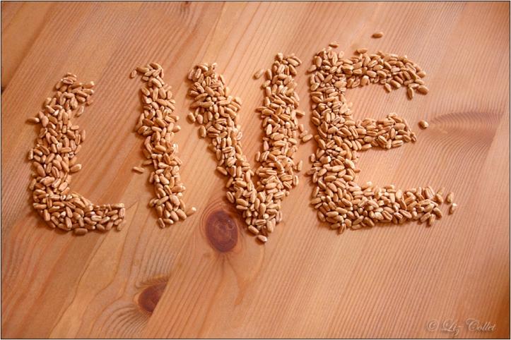 dinkel, Bio-Dinkelreis © Liz Collet,dinkelkerne, getreide, herz, herzform, herzförmig, herzgesundheit, gesunde ernährung, vollwertnahrung, vollwerternährung, gesundheit, lebensmittel, grundnahrungsmittel, zutat, holztisch, buchenholz, buchenholztisch, nachhaltigkeit, regionale produkte, erzeugnis, agrarprodukt, agrarwirtschaft, dinkelanbau, getreideernte, ernte, biodinkel, biodinkelreis, bio-dinkel, bio-dinkelreis, urweizen, getreideart, korn