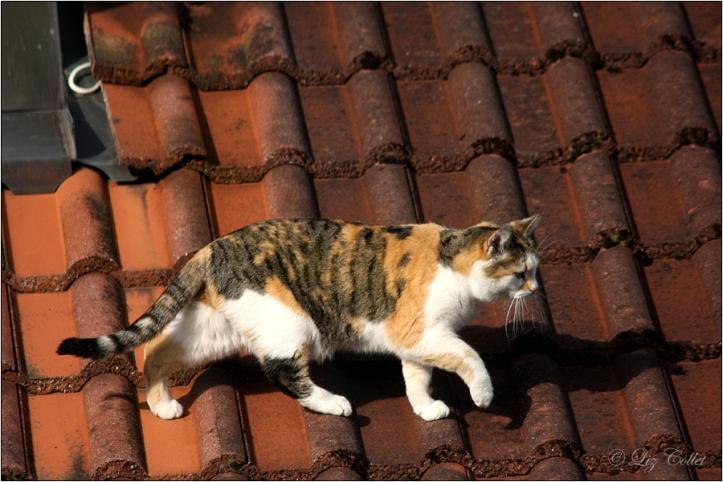 Minka auf dem Morgenspaziergang über's Dach © Liz Collet